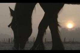 grazing horse3