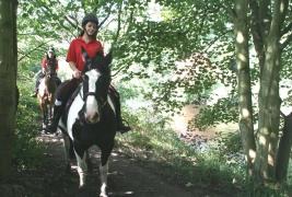 horses by Goyt