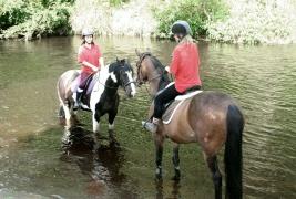 horses in Goyt
