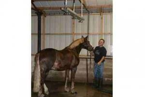 horse-shower