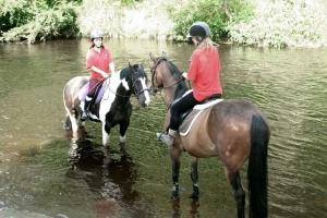 horses-in-Goyt