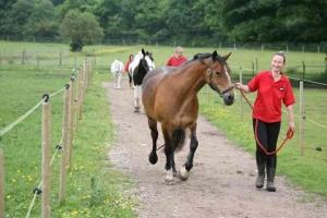 horses-on-track