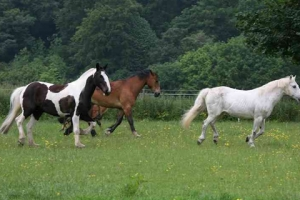 our-horses-in-field