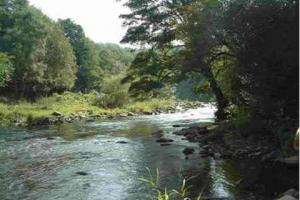 river-scene